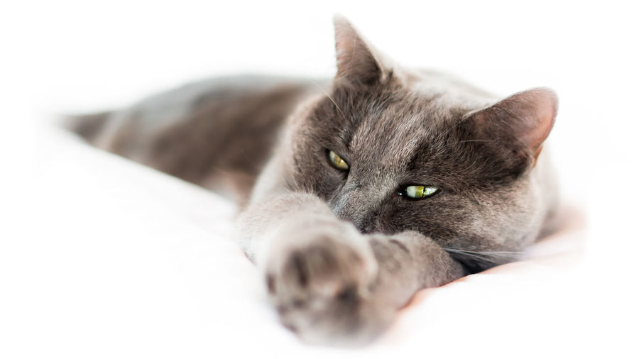 Bedtime EyeEmNewHere Home Animal Themes Cat Close-up Day Domestic Animals Domestic Cat Feline Fujifilm Indoors  Lying Down Mammal No People One Animal Pets Portrait Relax Relaxation Sleep White Background