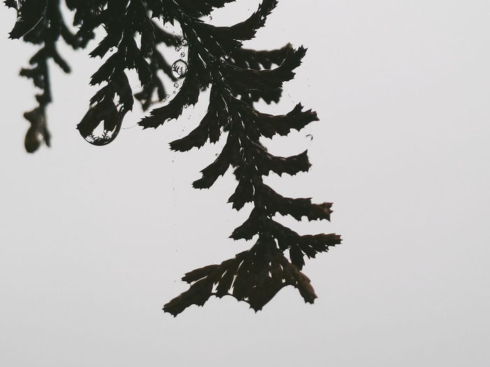 Close-up of leaves over white background