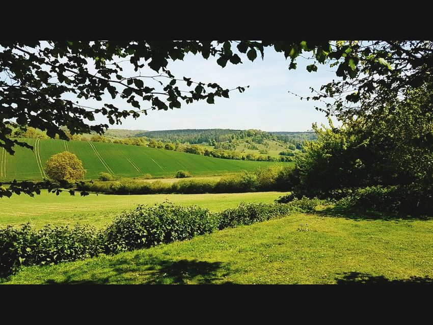 English countryside Plant Landscape Environment Field Green Color Tree Scenics - Nature