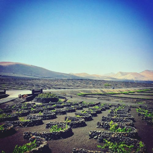 Volcano Vineyards  Landscape Lanzarote Canary Islands Wine Tasting Soaking Up The Sun Sunshine ☀ Sunshine Fueteventura Ferry Happiness Relaxing Holiday Enjoying Life Lovely Weather
