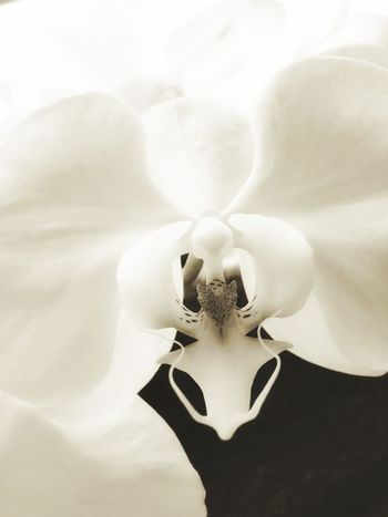 Art Artistic Orchids Orchid Flowers Monochrome Blackandwhite Black & White Black&white Blackandwhite Photography Flower Flower Porn Flowerlovers Showcase: November Followme Follow4follow IPS2015Light Macro Beauty IPS2016Nature IPS2016Closeup