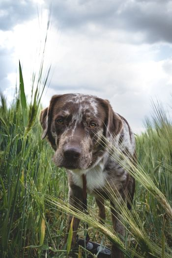 Close-up portrait of dog standing amidst plants