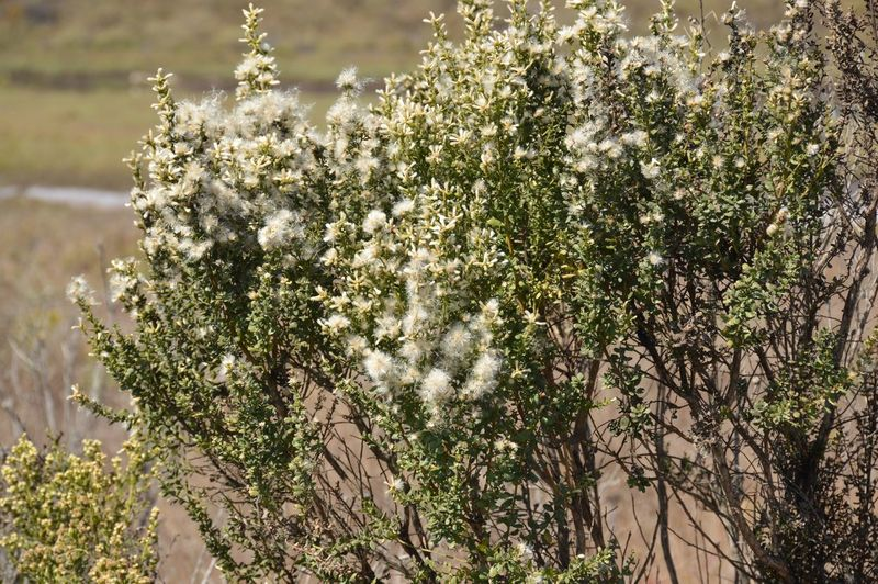 Close-up of white flowering plant against trees