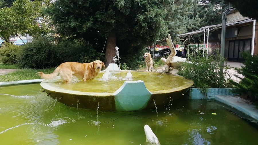 stray dogs. refreshing in a fountain Refreshment Fountain Hot Summer Summer Heat Stray Dog Dog Water Public Fountain Water Slide Water Spraying Tree Swimming Pool Water Park Motion Waterfront Fountain Splashing Pet Collar Flowing Water Canine Pet Leash
