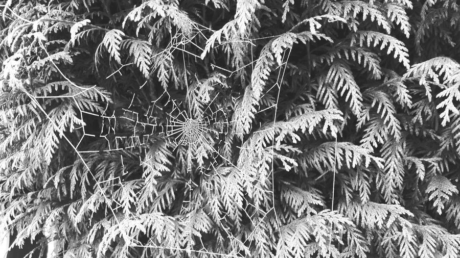 Frozen Cobweb Structure And Nature Beauty In Nature