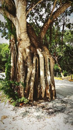 Tree Day Outdoors Tree Trunk Growth No People Nature Beauty In Nature Vacations Summer Nature Landscape Plant Part Green Color