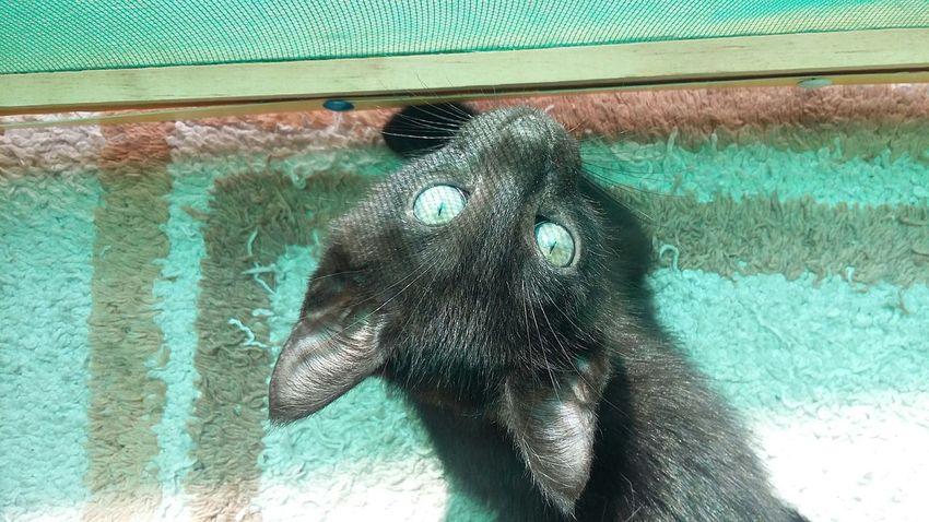 Sunny Cat Blackcatlove Taking Photos No Filter Blackcats Babycat Green Eyes Check This Out