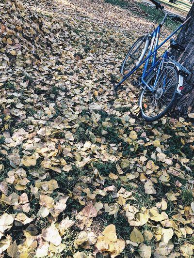 Bycicle Gostivar Macedonia Autumn Autumn Leaves Autumn Colors Autumn Collection Colors Of Autumn Tree VSCO IPhoneography Vscocam Showcase: November