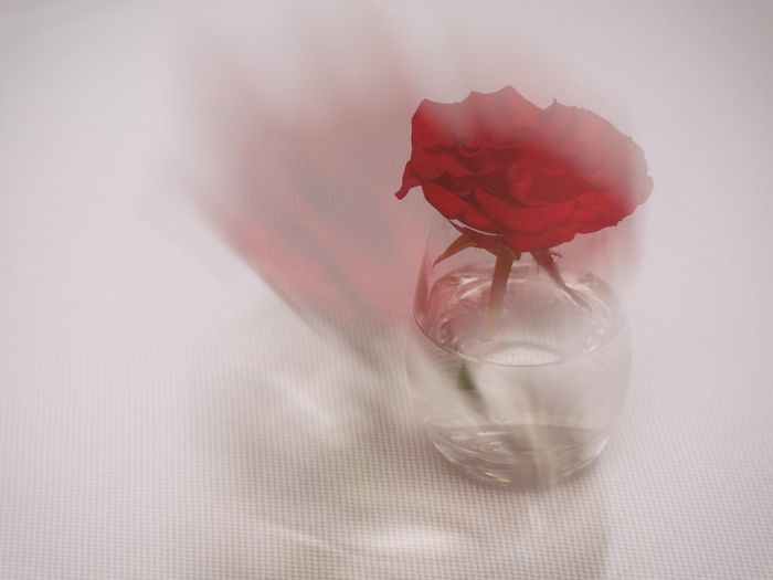 Red Petal Flower Fragility Indoors  No People Flower Head Close-up Rose - Flower Table Nature Freshness Beauty In Nature