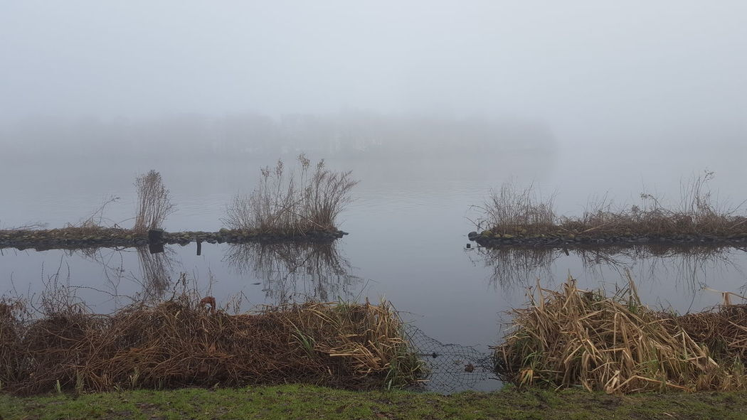 Alster Außenalster Germany🇩🇪 Hamburg Hamburg City January January 2018 Winter Winter Fog Außenalster Beauty In Nature Day Foggy Foggy Day Germany Lake Lake View Mystical Atmosphere Nature No People Outdoors Peaceful Peaceful And Quiet Silence Of Nature Fog Tranquil Scene Tranquility Water Scenics Landscape