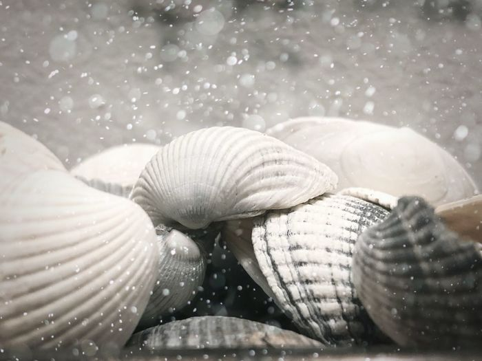 Sea shells Splash Sealife Seaside Shell Animal Shell Close-up Animal Wildlife Seashell Animal Animal Themes Selective Focus Sea Natural Pattern Nature Marine Water Day