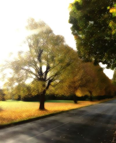 Tree Nature Growth Outdoors Beauty In Nature Changing Colors Autumn Colors Autumn Nature On Your Doorstep Gold Colored Edit Junkie