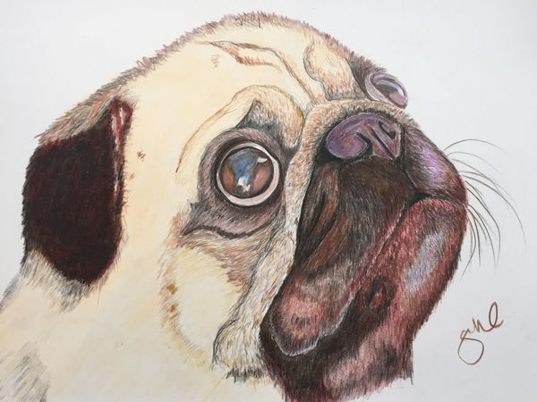 Domestic Animals Animal Head  Dog Pets Animal Eye Pug Nature_collection My Artwork ArtWork Art #illustration #drawing #draw #tagsforlikes #picture #photography #artist #sketch #sketchbook #paper #pen #pencil #artsy #in Art, Drawing, Creativity Coloured Pencils Artistic Expression Artist Myartwork Pencil Drawing MyArt Drawing Animal_collection