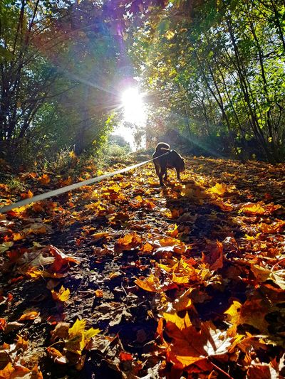 Leaf Nature Tree Sunlight Day Outdoors Autumn Animal Themes Growth Beauty In Nature Forest Two People People Water Pets Mammal Dog Sharpei Second Acts