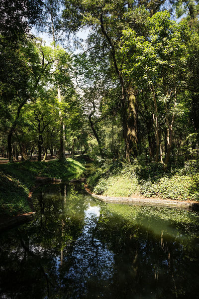 Chapultepec Park Calm Calmness Chapultepec Castle Green Mexico Mexico City Reflection Tree Trees Beauty In Nature Calm Water Cdmx Chapultepec Chapultepec CDMX Chapultpec Greenery Park Park - Man Made Space Reflections Tranquil Scene Tranquility Trees And River Treescape Urban Park