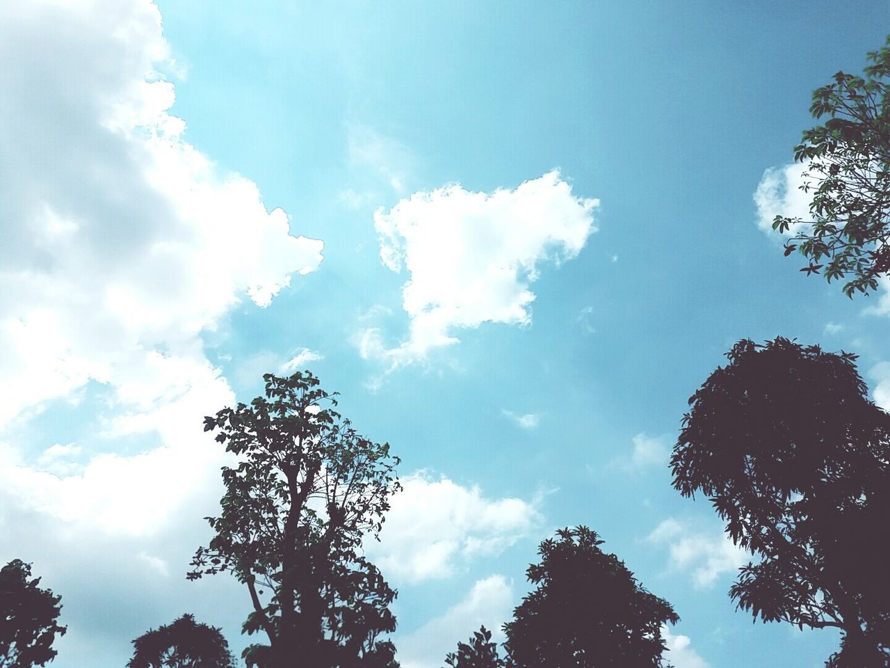 tree, sky, low angle view, nature, beauty in nature, cloud - sky, growth, day, tranquility, no people, scenics, outdoors