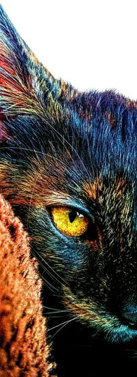 HDR Hdr_Collection Cat Animals High Definition Colors Portrait