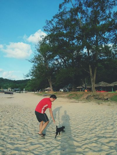 pantai nekko Nekko Sunset Happy Kucing Beach Tree Enjoyment