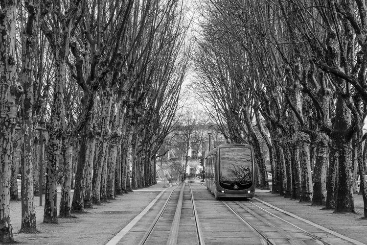 Train on tracks amidst bare trees