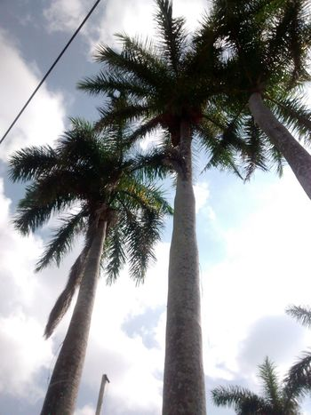 Sky And Clouds Beauty In Nature Cloud - Sky Day Growth Low Angle View Nature No People Outdoors Palm Tree Scenics Sky Tall Tall - High Tree Tree Trunk