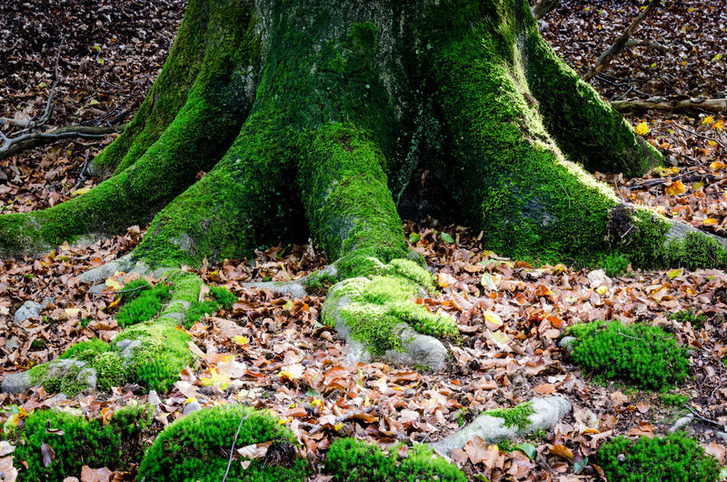 Moss growing on land in forest
