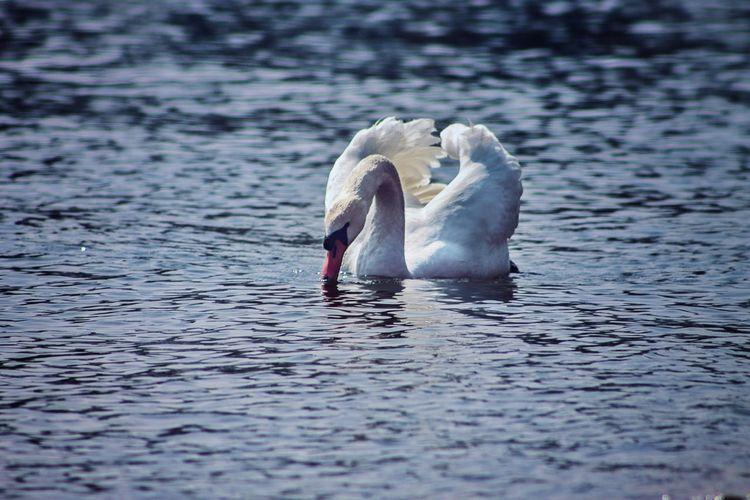 Swimming Nature