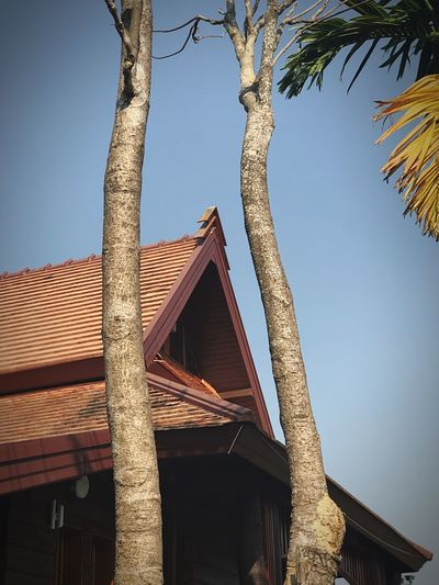 Low Angle View Architecture Built Structure Building Exterior Tree Day No People Clear Sky Outdoors Sky