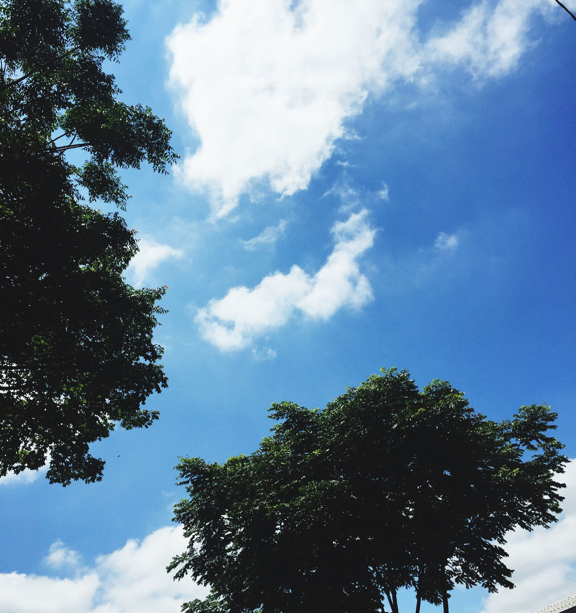 tree, low angle view, sky, nature, growth, cloud - sky, no people, day, beauty in nature, leaf, outdoors, treetop