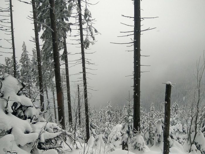 Scenic view of snow covered land and trees in forest