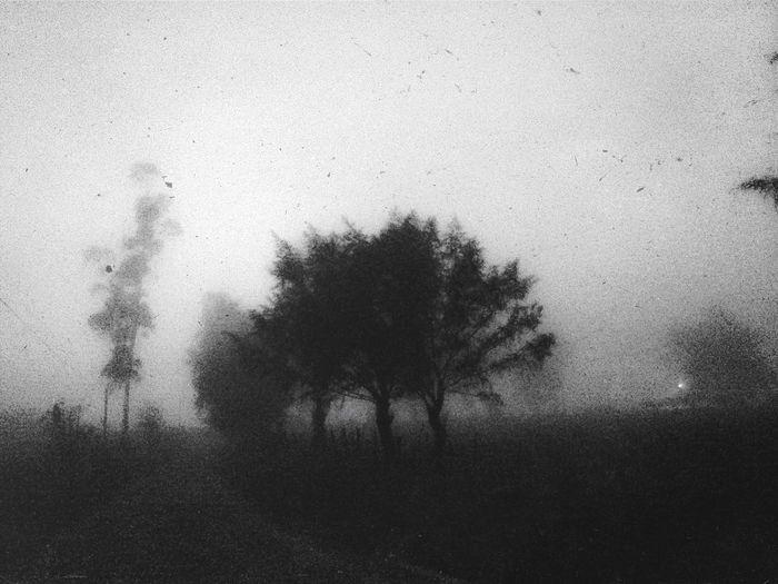 Landscape Blackandwhite Black & White IPhoneography Trees