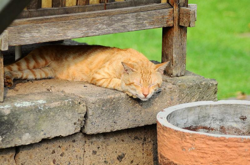 Cat sleeping on a wall