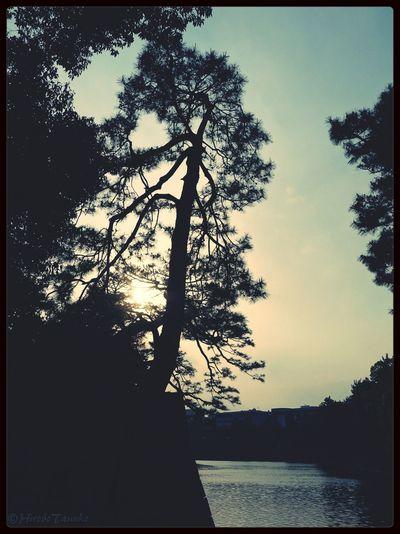 sunset Sunset Silhouette Tree Sunset Silhouettes