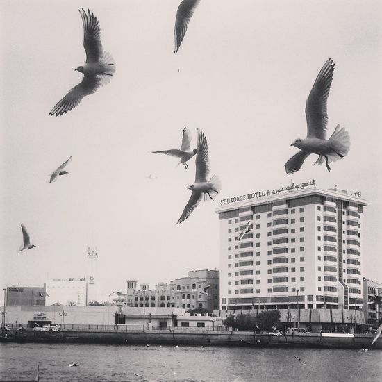 Seagulls Birds Funtime Dubai Newbeginning