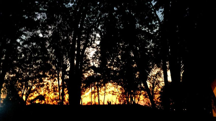Trees Skycolors Sunrise_Collection Skylovers Sunrise Sky_collection Good Morning Skyporn Sunriseporn 50 Shades Of Sunrise In my birthday party the sun came to play with us!