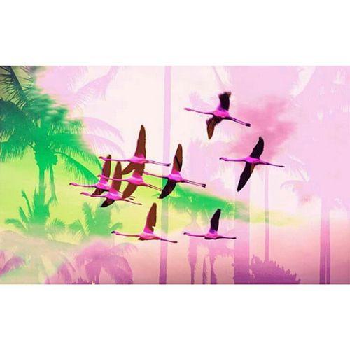 Mtpvice Mtp Miami Coco Coconut Flamingo Flamantrose Palavas Mix Mixed Doublexposure Doubleexposition Palms Palmier  Rosé Pink Green Vert Miamivice Gtavicecity Vice City Sky Ciel Bird oiseau
