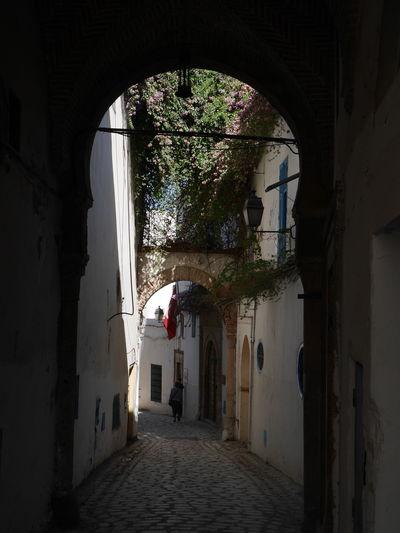 Day Empty Narrow Old Buildings Plants Street Tunis Tunisia
