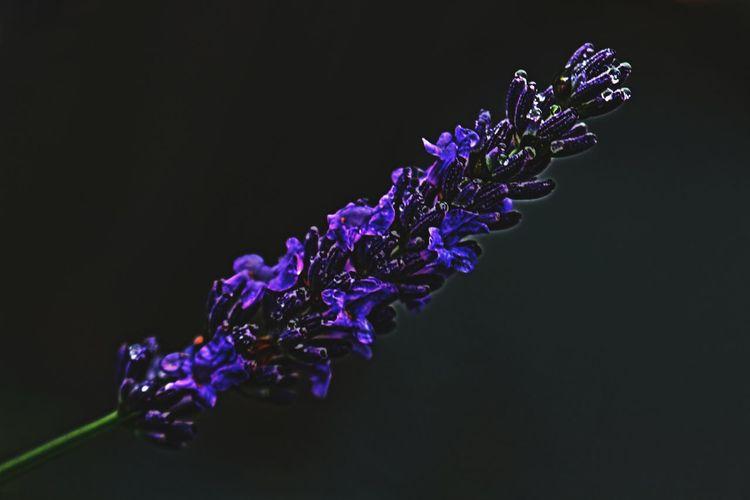 Garden Photography Canon_photos Flowers Canonphotography Colorfull Flower Plants 🌱 Garden Colorful Naturelovers