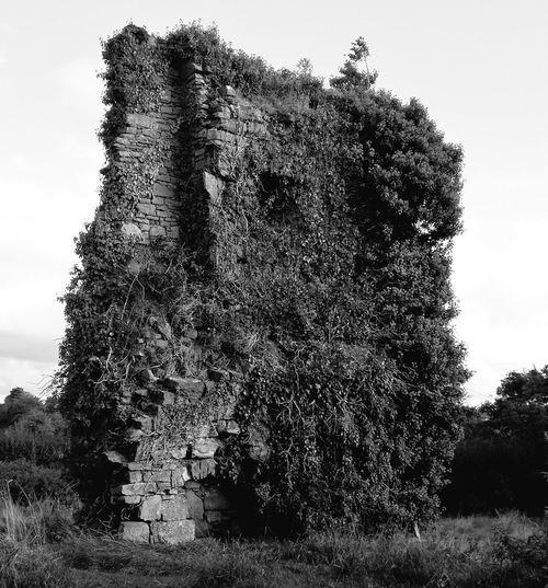 No People Sky Nature Day Outdoors Tree Beauty In Nature Close-up ivy bearded Old Building Ruin