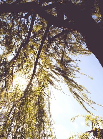 Arbres Nature On Your Doorstep Nature_collection Nature Photography Lifenature Naturelove Trees Arbres Tree_collection  Sauce Llorón Arboles , Naturaleza Trees And Sky Lightofthesun Lightofmylife