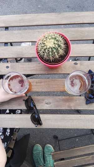 Directly above shot of beer by cactus plant on table
