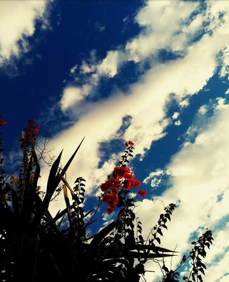 Flowers In The Sky Nature Low Angle View No People Outdoors