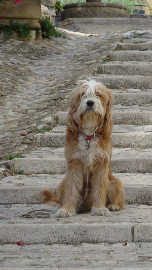 Dog sitting on footpath