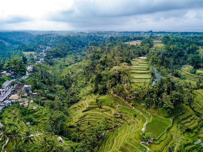 High angle view of rice field against cloudy sky