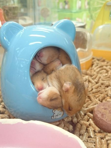 Cute!!!!!!!!! Animals Mousse Cute Adorable Taking Photos Hi! Owo Smallest Sleeping