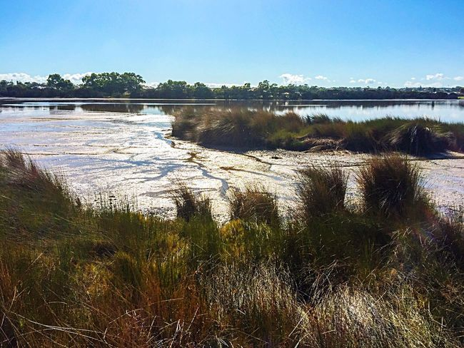 Lake Coogee Conservation Lake Water Nature Wetland Landscape Landscape Swamp Drought Wetland Lake Coogee Western Australia Reeds Mudflats Grasses Green Grass Tall Grasses Reserve Trees Peaceful View Tranquil Scene Calm Water