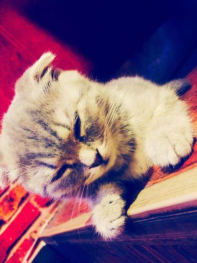 打盹的小猫 Enjoying Life First Eyeem Photo