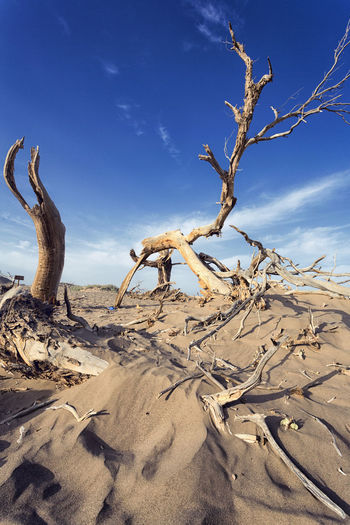 View of driftwood on sand