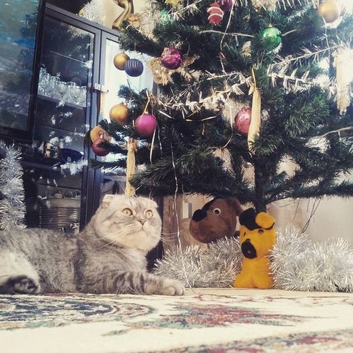 По-домашнему с котиком и елочкой