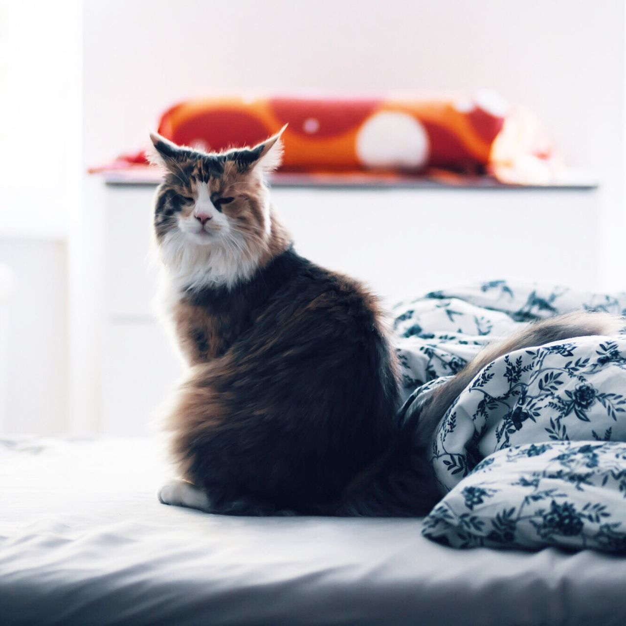 domestic cat, pets, one animal, animal themes, domestic animals, sitting, feline, cat, mammal, indoors, bed, no people, day, close-up