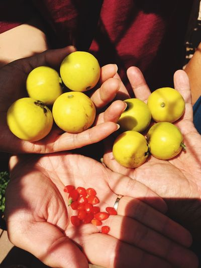 Close-up of hand holding fruits
